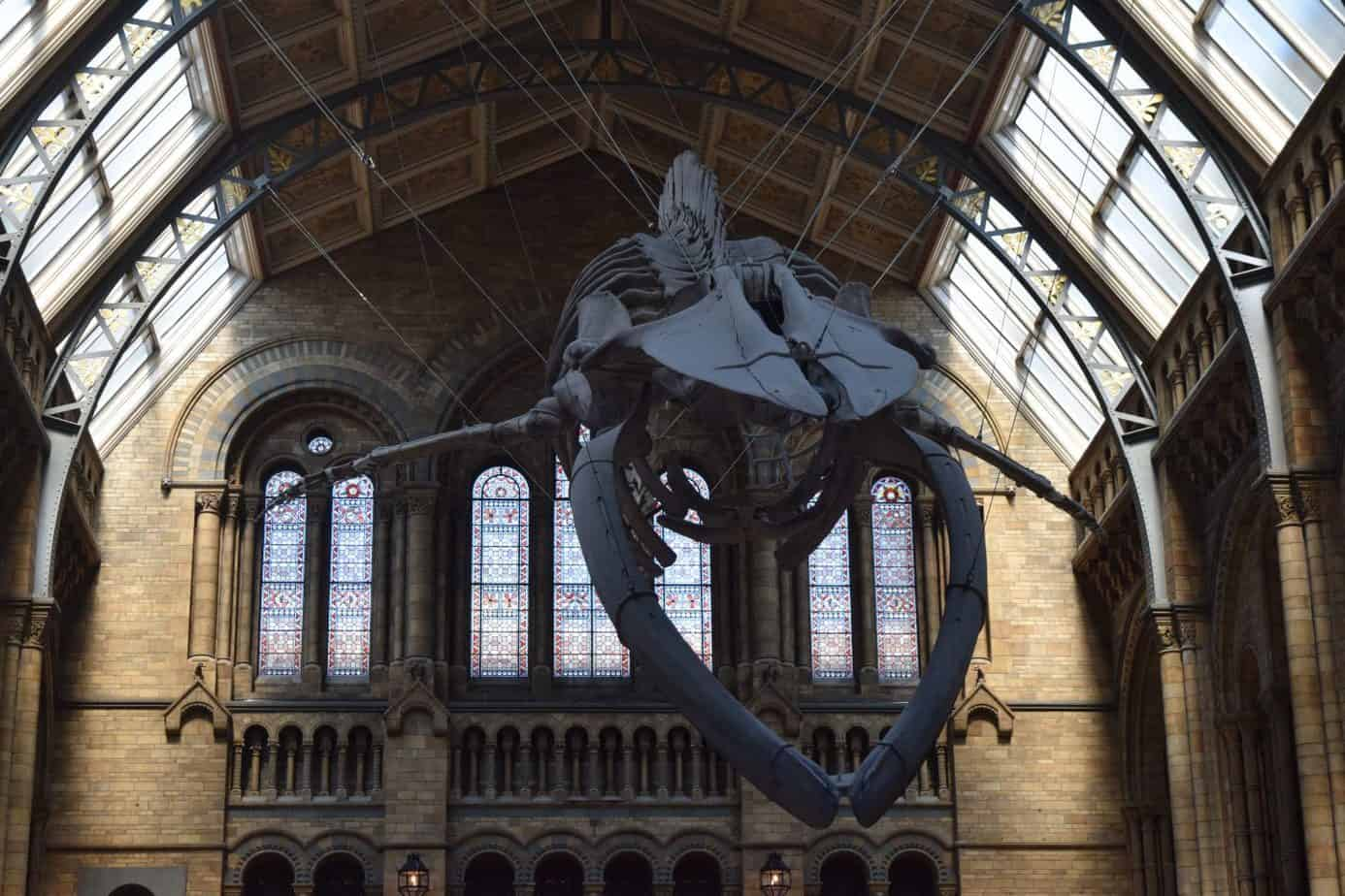 At the natural history museum