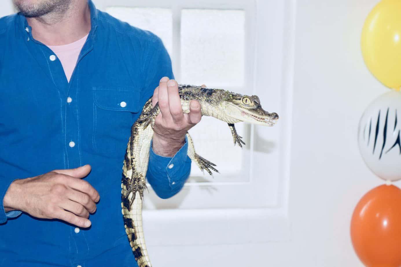 Jay Z the Crocodile