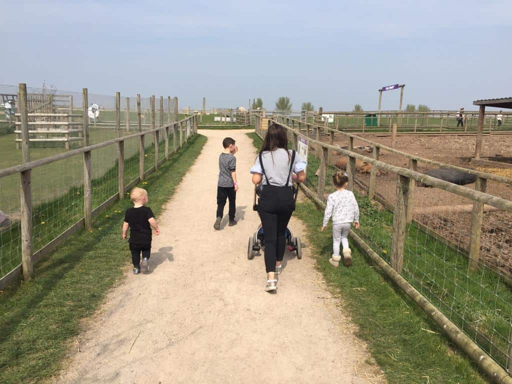 Walking by the Pigs at Hatton Adventure World
