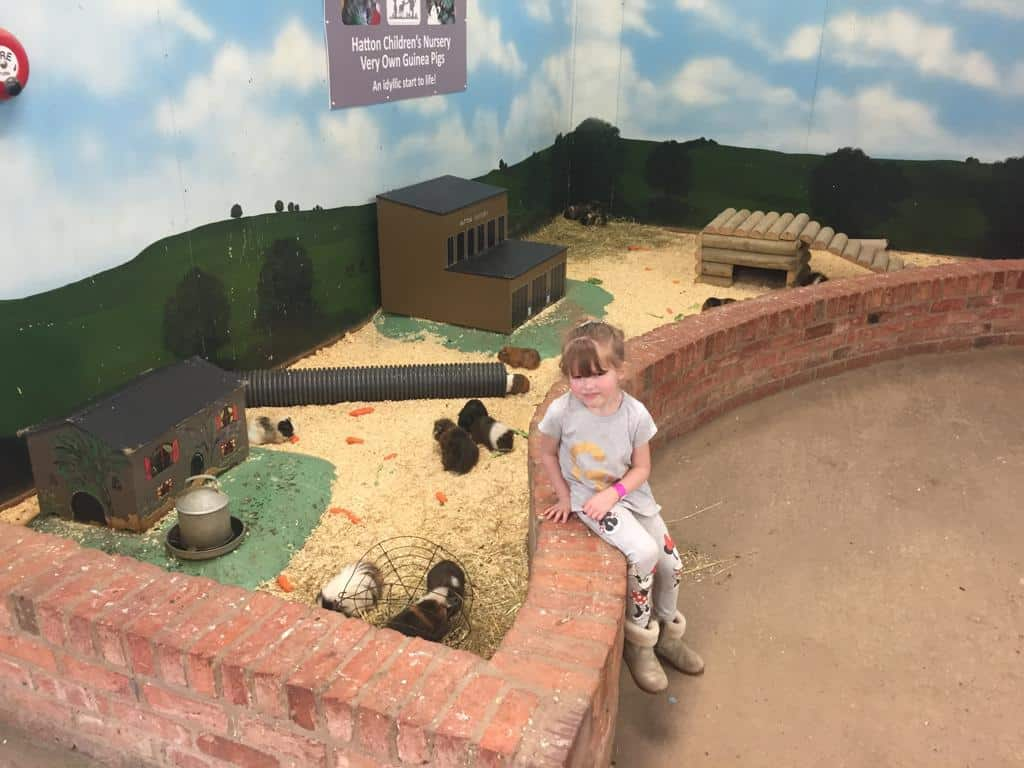 Guinea Pig Village at Hatton Adventure World
