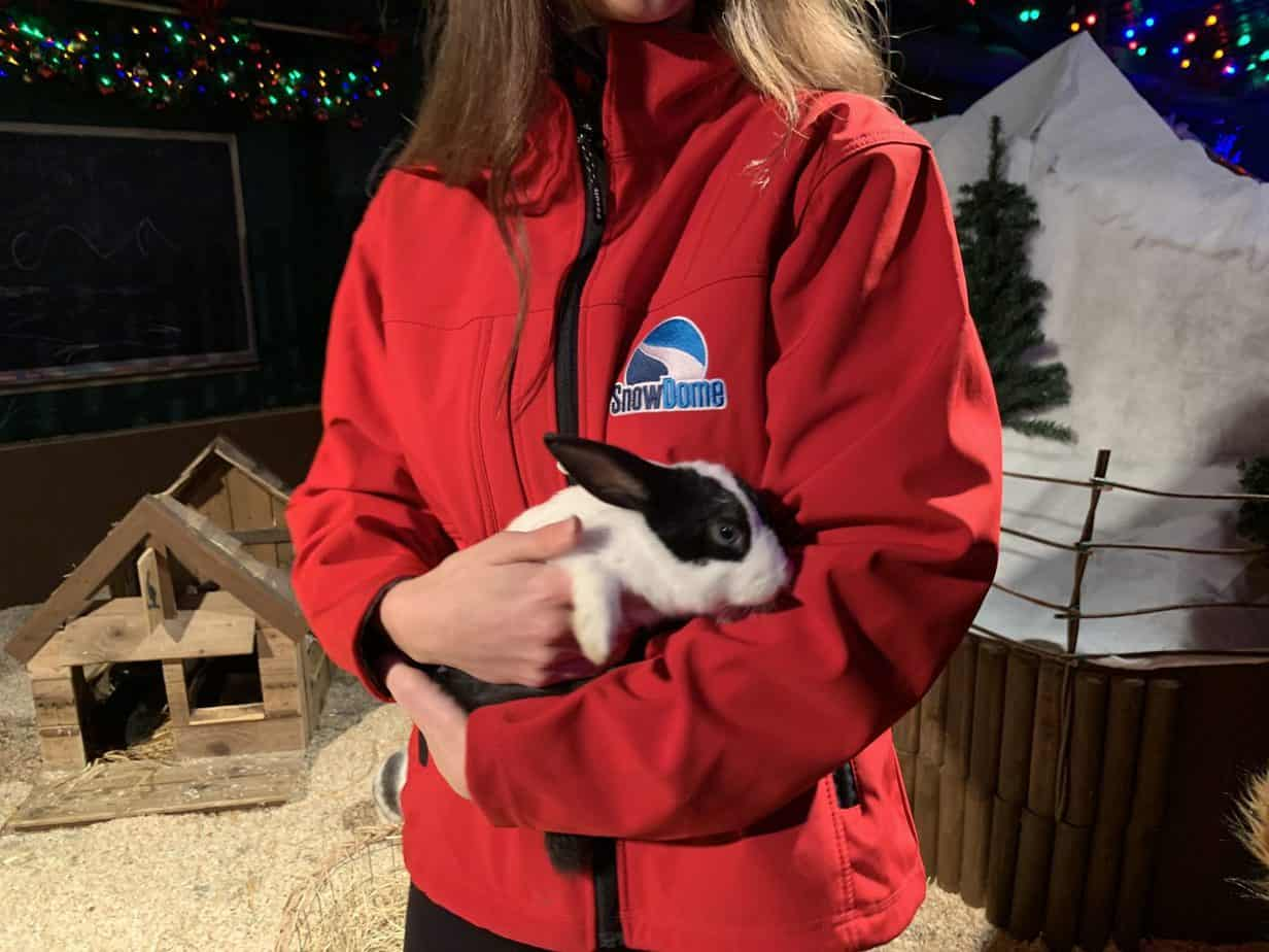 Rabbits at Santas Winter Wonderland SnowDome