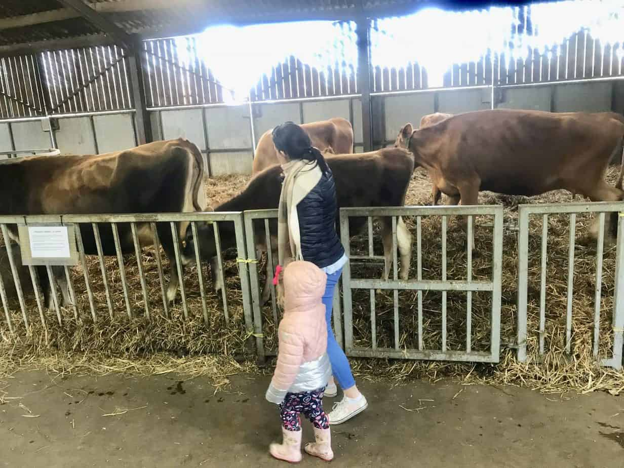 Free things to do Solihull Birmingham February half term sheldon country park cow