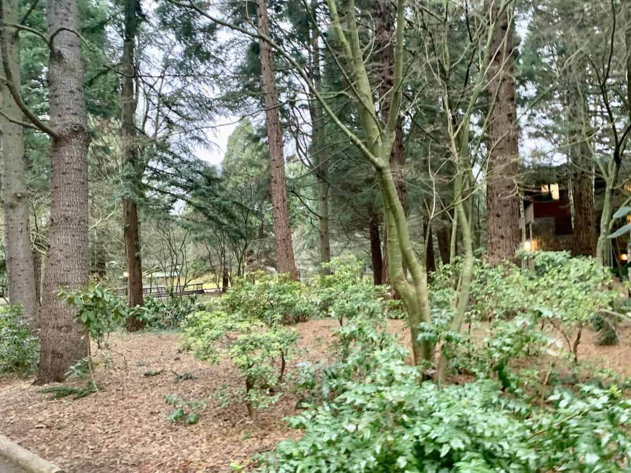 Woodlands around the lodges at Seqouia Lodge Hotel Disneyland Paris