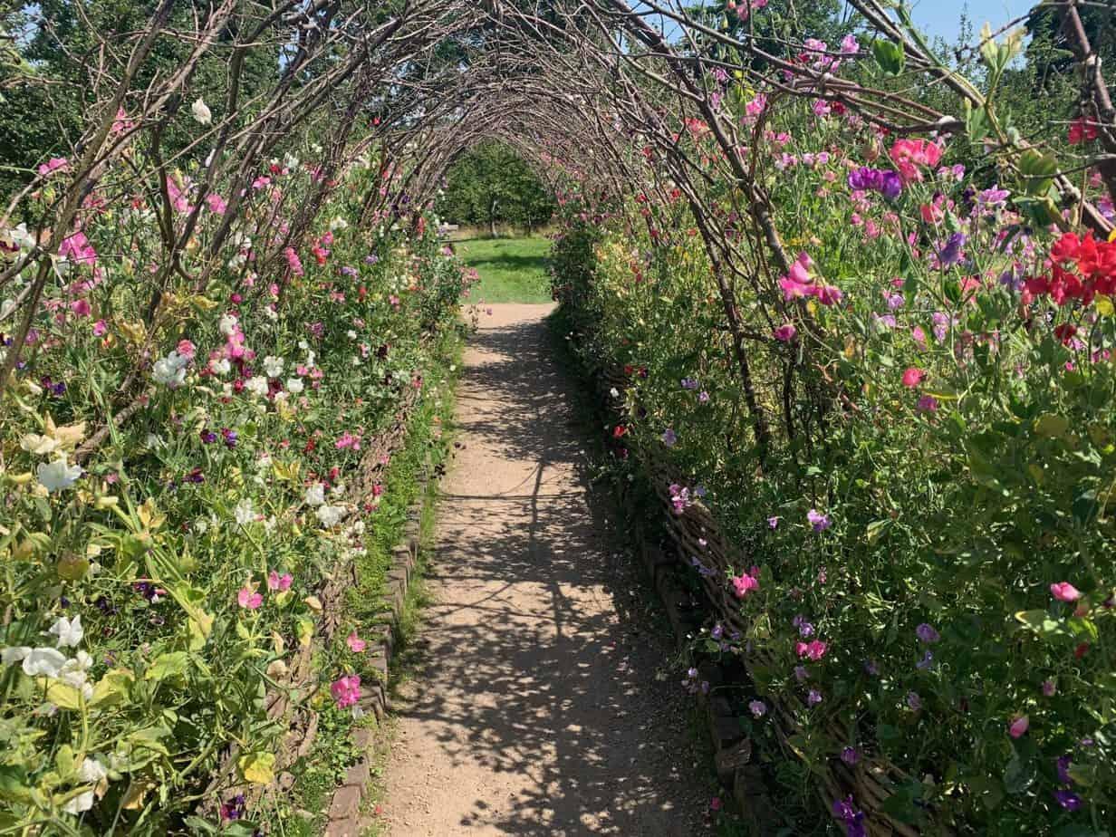 National Trust Calke Abbey Flower Arch