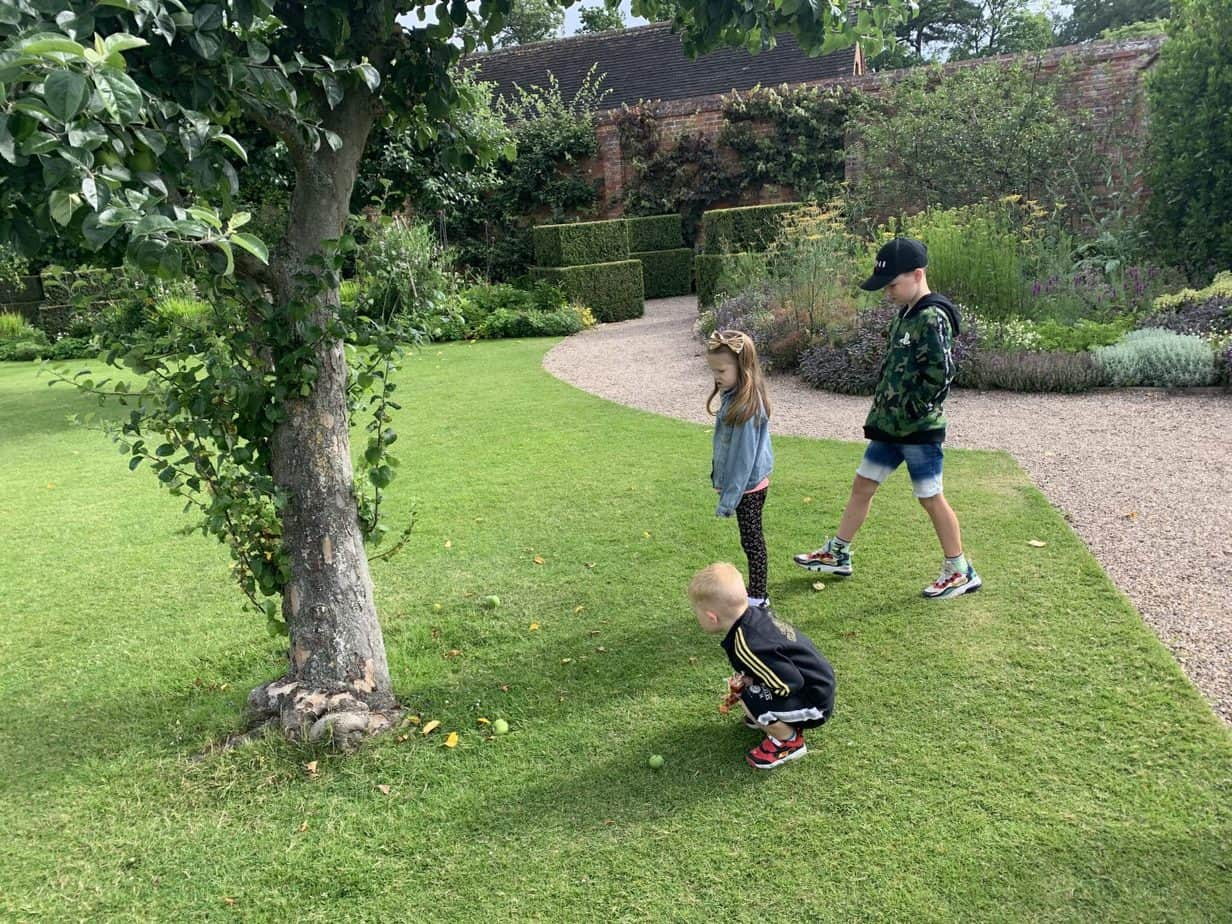 Picking apples at baddersley clinton is a reason why now is the best time to become National Trust Members