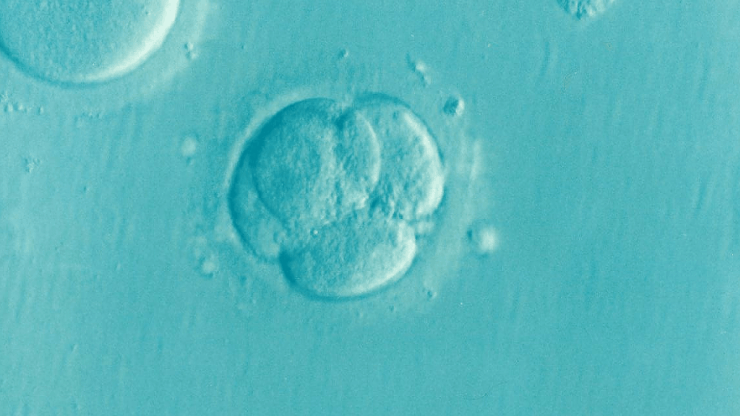 embryo 5 fantastic facts about female fertility