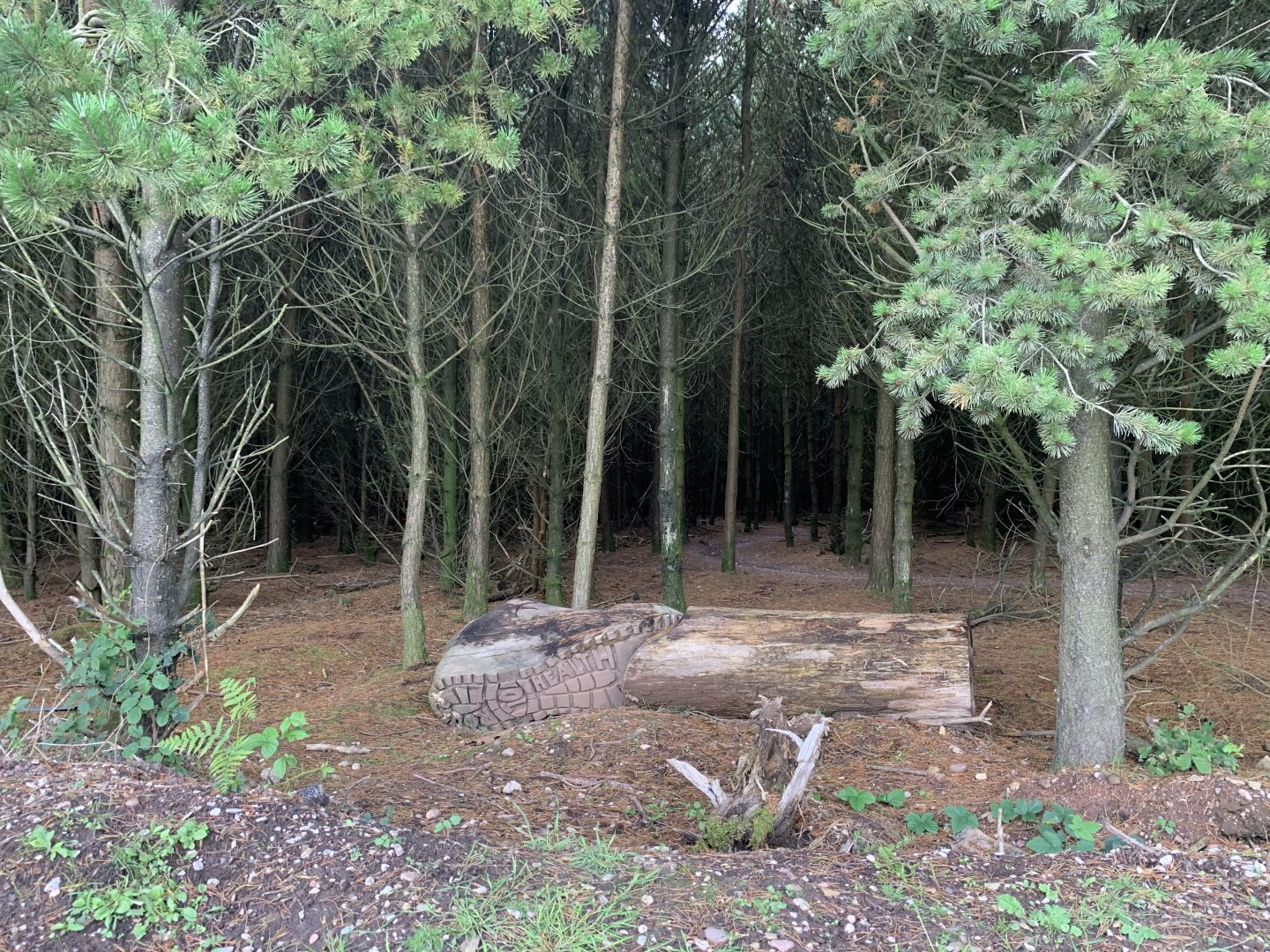 Forest Bike trail at Cannock Chase Staffordshire