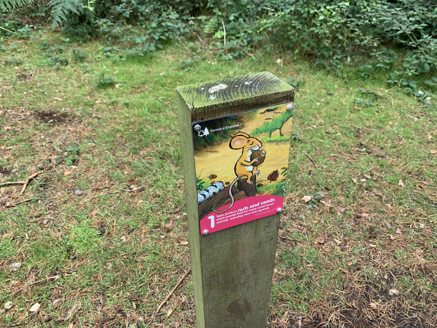 Wooden posts around the Gruffalo Trail Cannock Chase