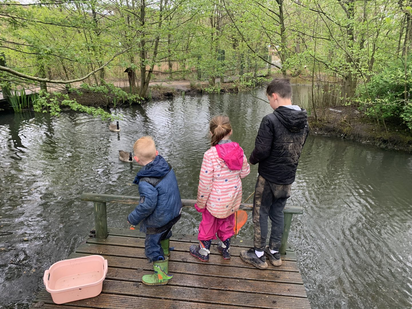 pond dipping at Willow Swamp Conkers Review